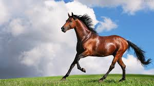 آب تنی اسب در استخر فاضلاب